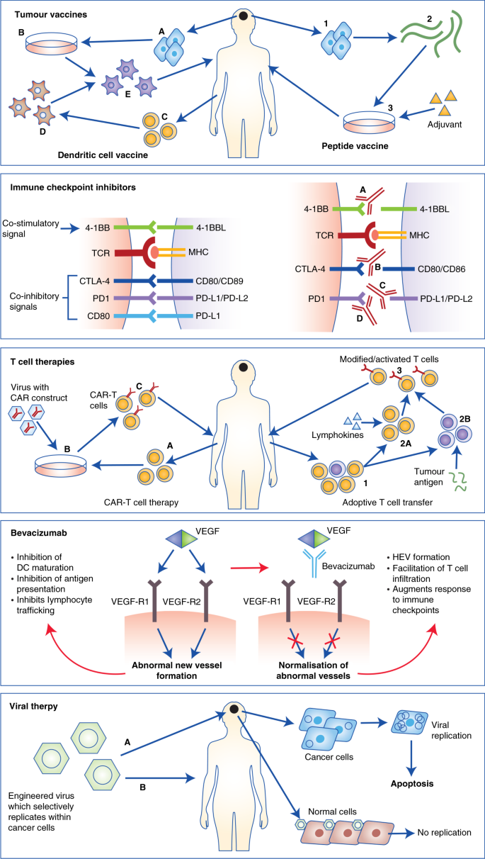 Harnessing the immune system in glioblastoma | British Journal of Cancer