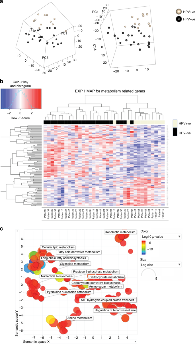 HPV, tumour metabolism and novel target identification in