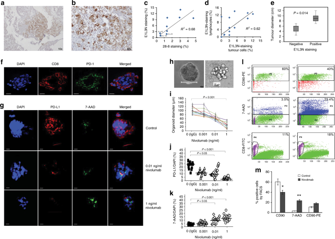 Patient-derived organoids as a potential model to predict response to