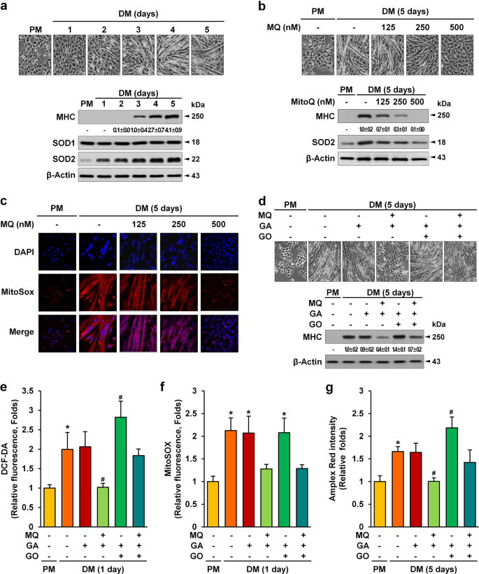 Mitochondrial ROS-derived PTEN oxidation activates PI3K