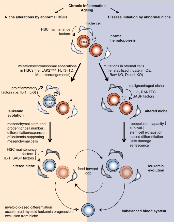 Necroinflammation emerges as a key regulator of hematopoiesis in