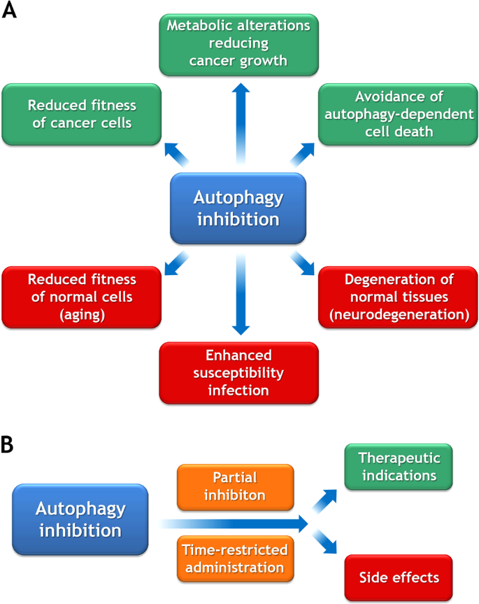 Therapeutic modulation of autophagy: which disease comes first
