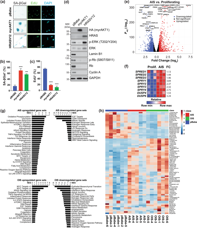 A functional genetic screen defines the AKT-induced senescence signali