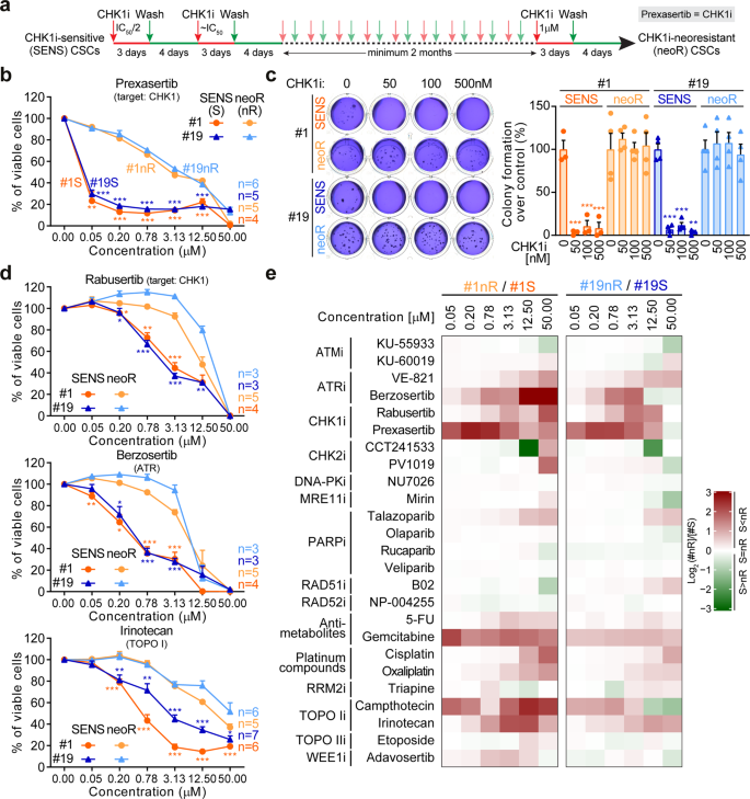 Control Of Replication Stress And Mitosis In Colorectal Cancer Stem Cells Through The Interplay Of Parp1 Mre11 And Rad51 Cell Death Differentiation