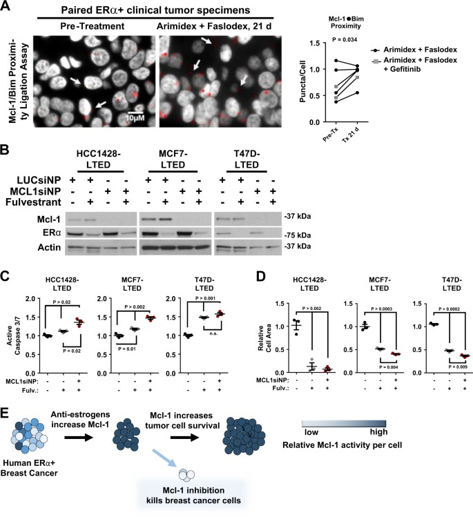 Intrinsic apoptotic pathway activation increases response to