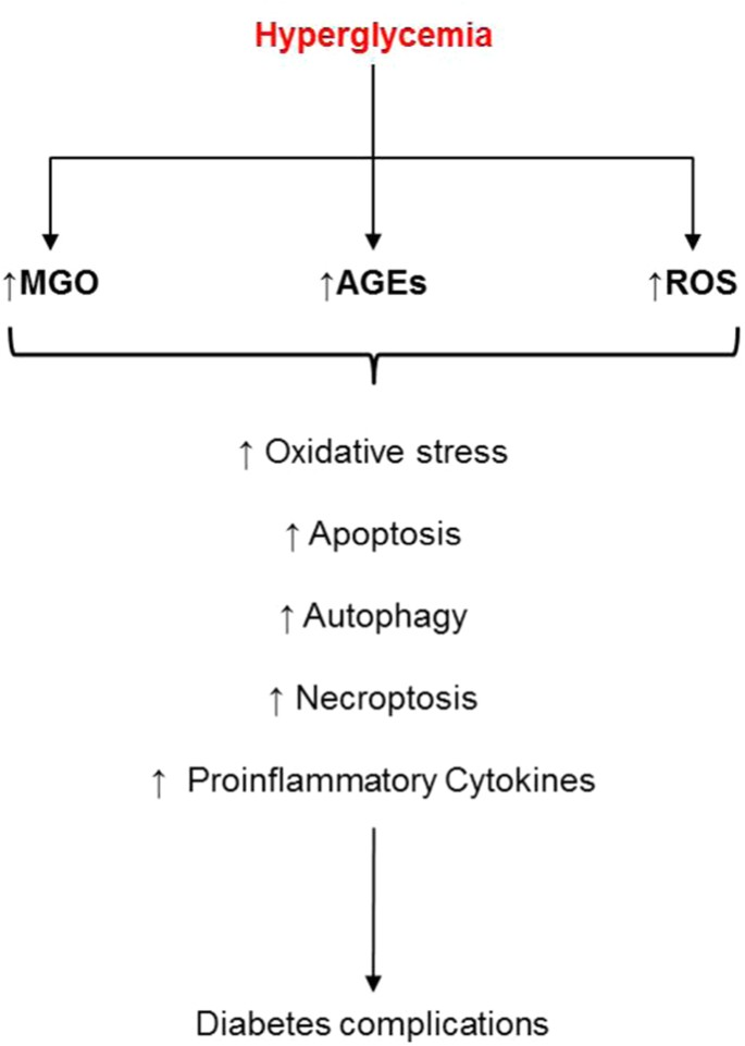 Cellular death, reactive oxygen species (ROS) and diabetic