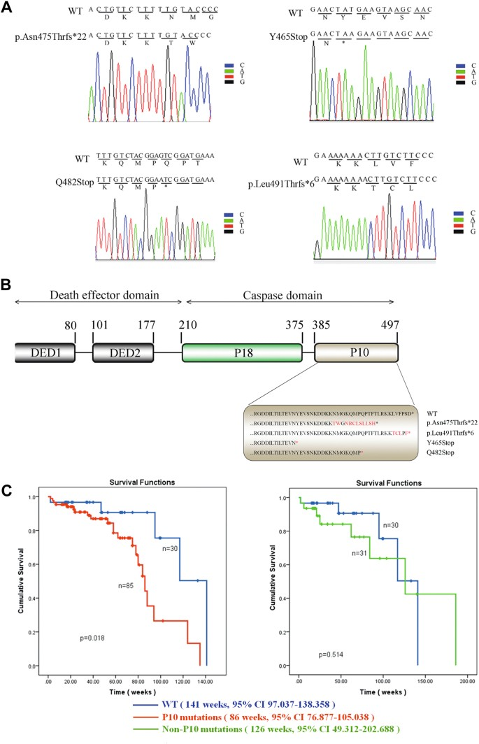 Mutations in the P10 region of procaspase-8 lead to