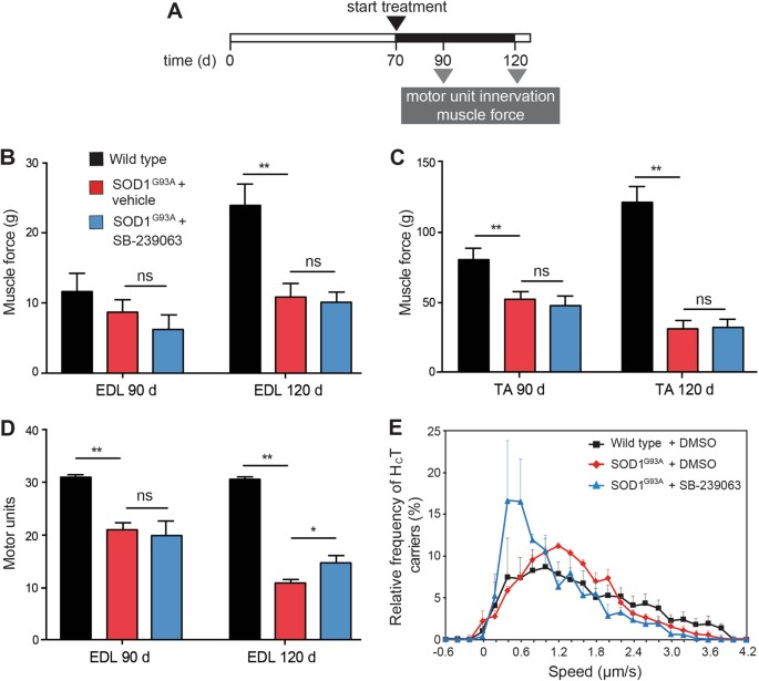 Inhibiting p38 MAPK alpha rescues axonal retrograde