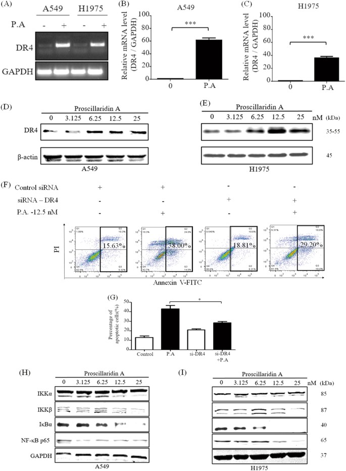 Proscillaridin A induces apoptosis and suppresses non-small-cell