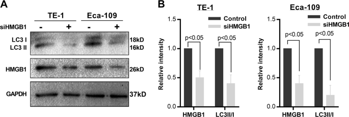 High mobility group box 1 promotes radioresistance in