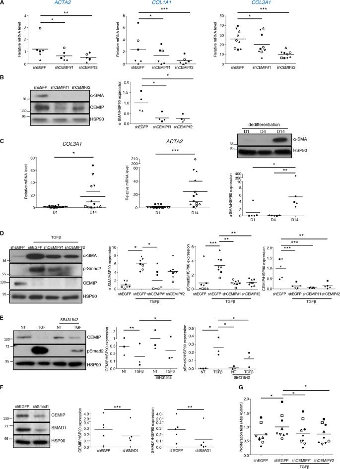 CEMIP (KIAA1199) induces a fibrosis-like process in