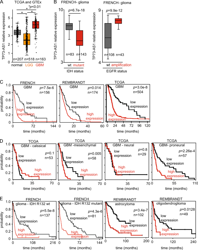 The lncRNA TP73-AS1 is linked to aggressiveness in glioblastoma and