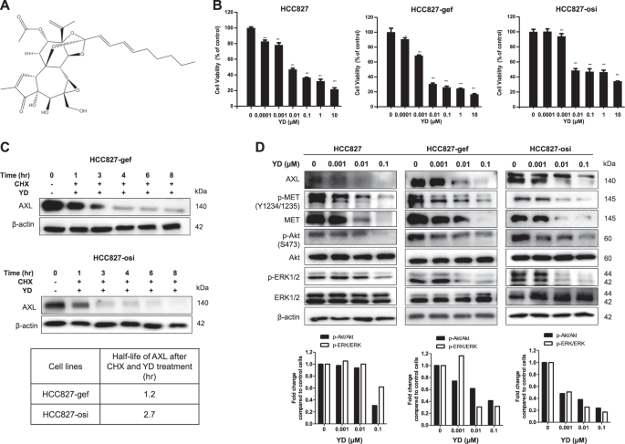 AXL degradation in combination with EGFR-TKI can delay and