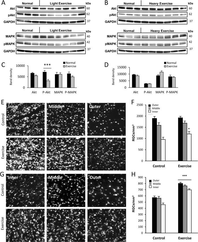 Modifying PTEN recruitment promotes neuron survival, regeneration