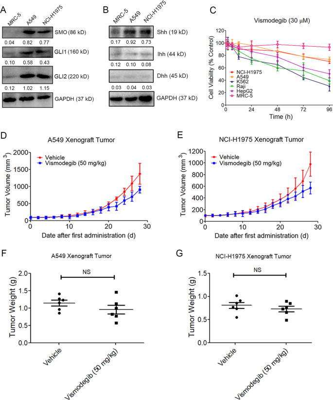 Regulating autophagy facilitated therapeutic efficacy of the sonic Hed