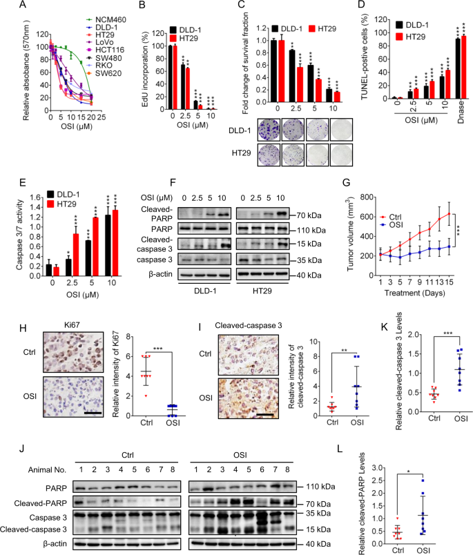 MCT1 relieves osimertinib-induced CRC suppression by promoting autopha