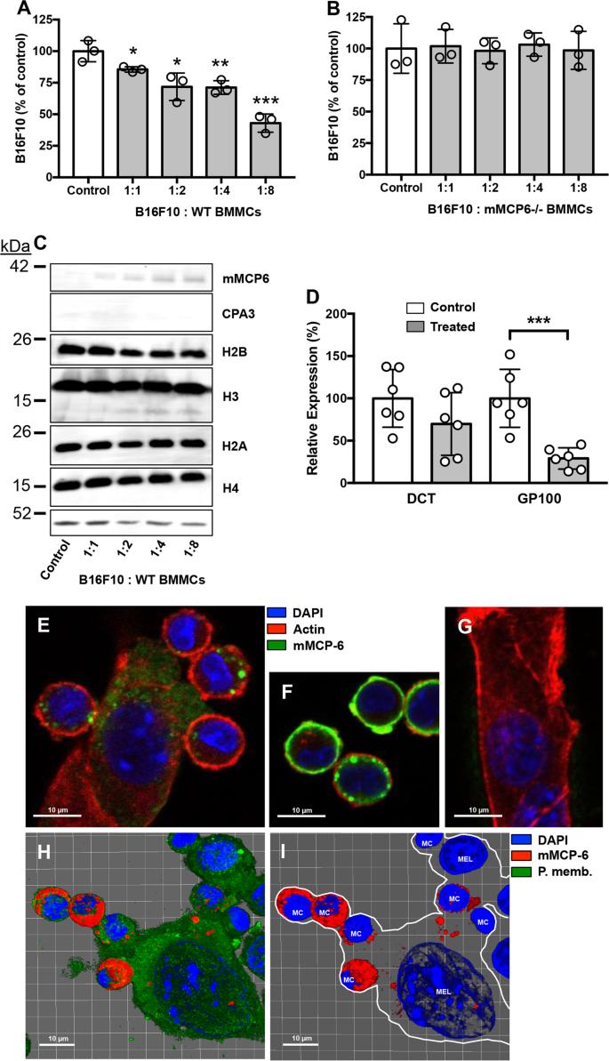 Exosome-mediated uptake of mast cell tryptase into the nucleus of mela