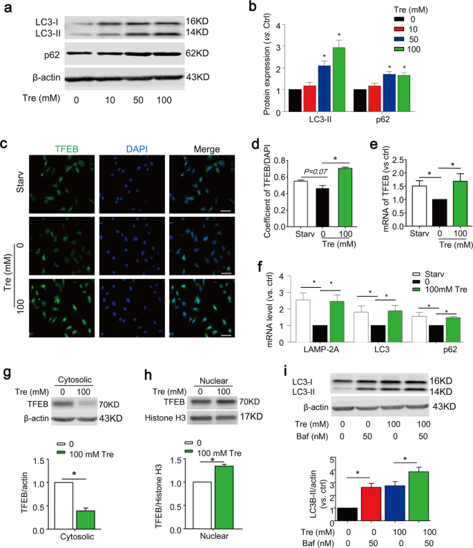 Activation of TFEB ameliorates dedifferentiation of arterial smooth mu