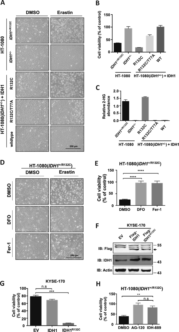 The oncometabolite 2-hydroxyglutarate produced by mutant IDH1 sensitiz