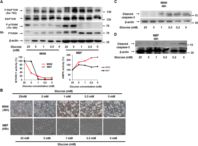 Essential role of glucokinase in the protection of pancreatic β c