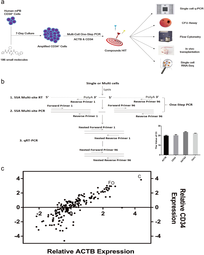 Maintenance of human haematopoietic stem and progenitor