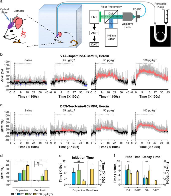 Response dynamics of midbrain dopamine neurons and serotonin neurons