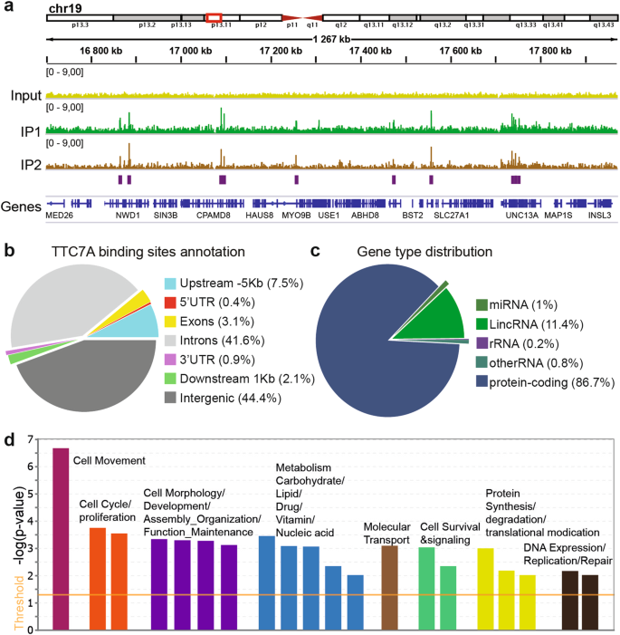 Tetratricopeptide repeat domain 7A is a nuclear factor that