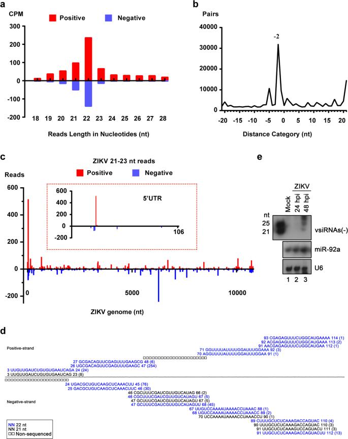 Zika virus infection induces RNAi-mediated antiviral