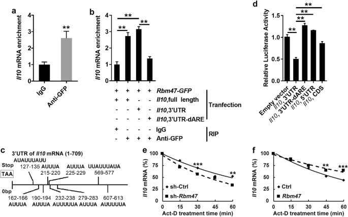 Post-transcriptional regulator Rbm47 elevates IL-10 ... on