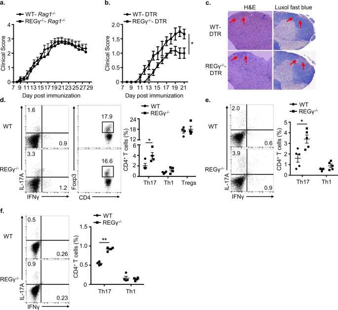 REGγ controls Th17 cell differentiation and autoimmune