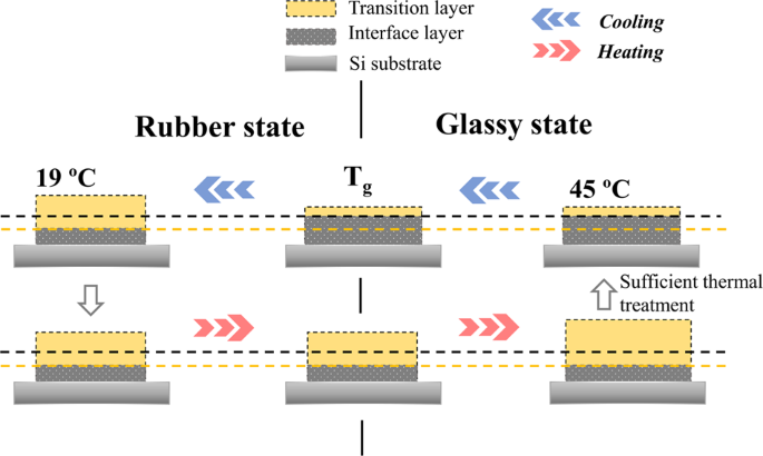 Slow dynamics in thermal expansion of polyvinyl acetate thin film
