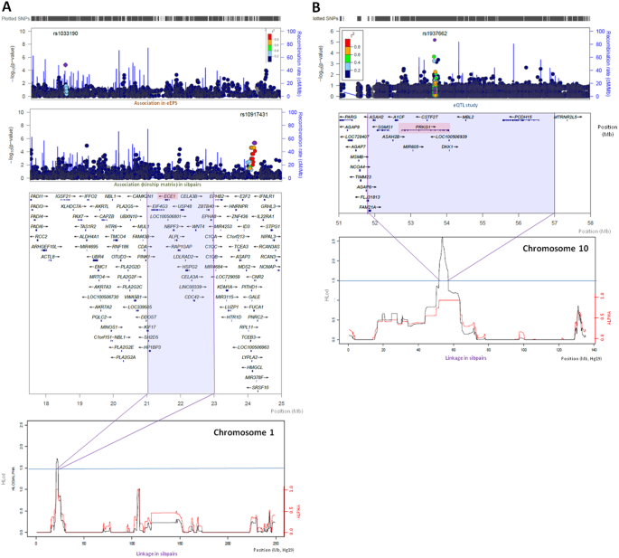 Association of modifiers and other genetic factors explain Marfan