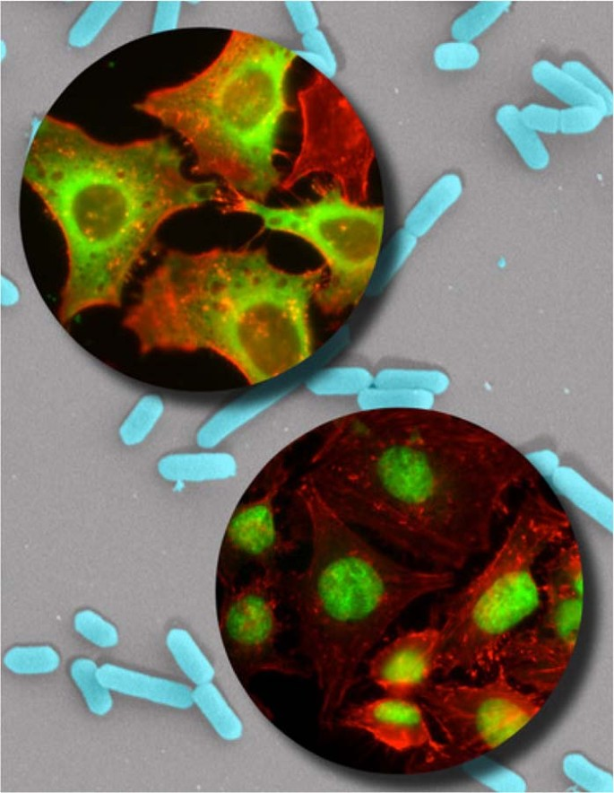 The best of both worlds—bringing together cell biology and