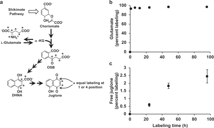 The origin and biosynthesis of the naphthalenoid moiety of
