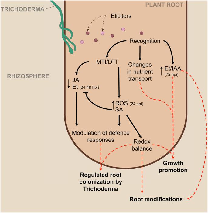 Transcriptome reprogramming, epigenetic modifications and