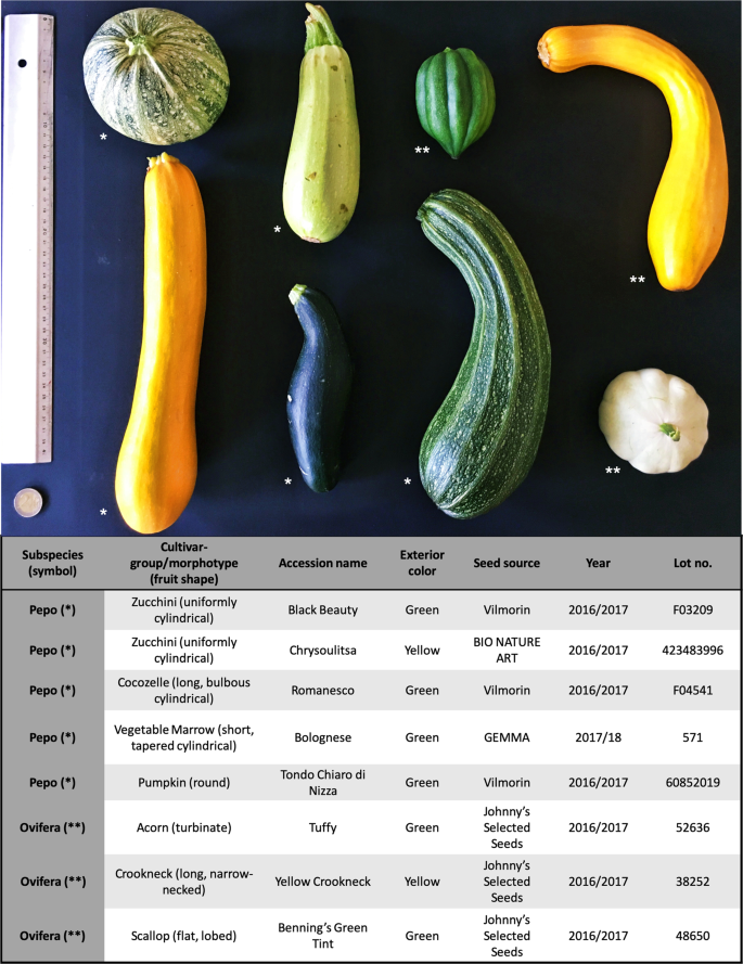 Whole-genome resequencing of Cucurbita pepo morphotypes to discover ge