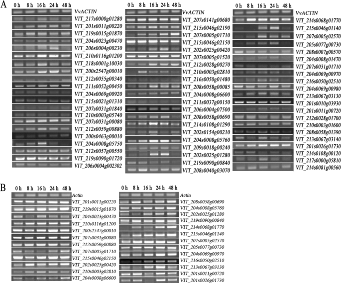 Functional characterization of WRKY46 in grape and its putative role i
