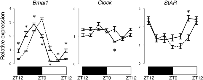 The Adrenal Gland Circadian Clock Exhibits A Distinct Phase Advance In Spontaneously Hypertensive Rats Hypertension Research It's not only about having the best horse in terms of. the adrenal gland circadian clock