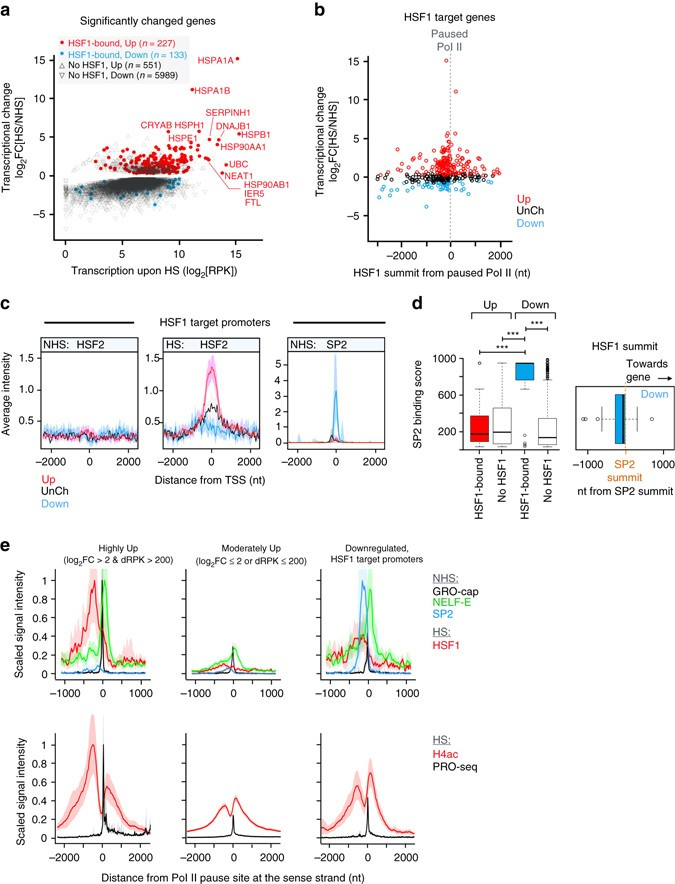 Transcriptional response to stress is pre-wired by promoter and