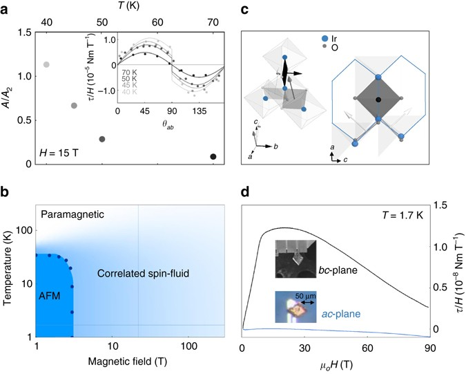 Robust spin correlations at high magnetic fields in the