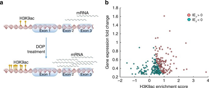 Identifying therapeutic targets by combining transcriptional