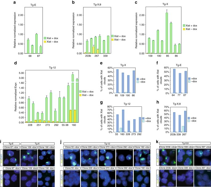 Genetic and epigenetic features direct differential
