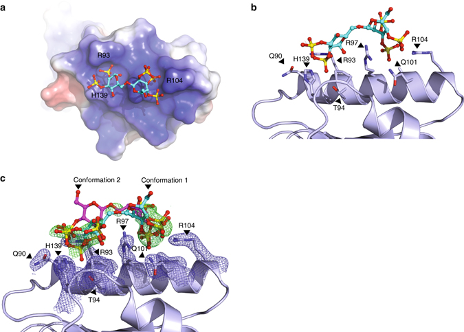 heparan sulfate proteoglycans present pcsk9 to the ldl