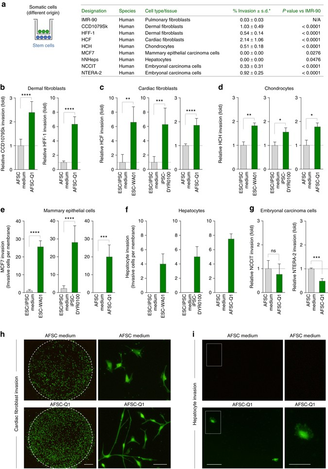 Human stem cells alter the invasive properties of somatic cells via