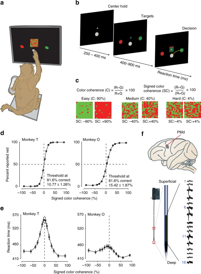 Laminar differences in decision-related neural activity in dorsal