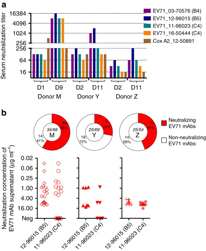 Epitope-associated and specificity-focused features of EV71