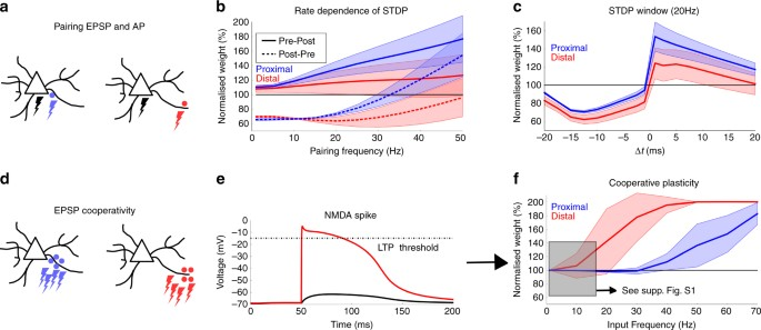 Modeling somatic and dendritic spike mediated plasticity at