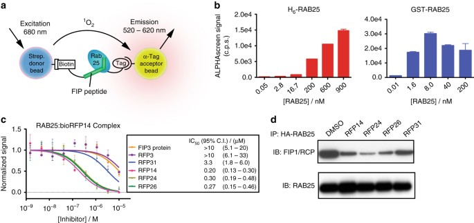 Stapled peptide inhibitors of RAB25 target context-specific