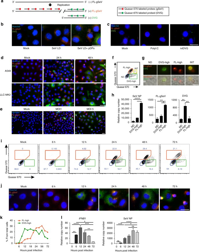 Replication defective viral genomes exploit a cellular pro ...