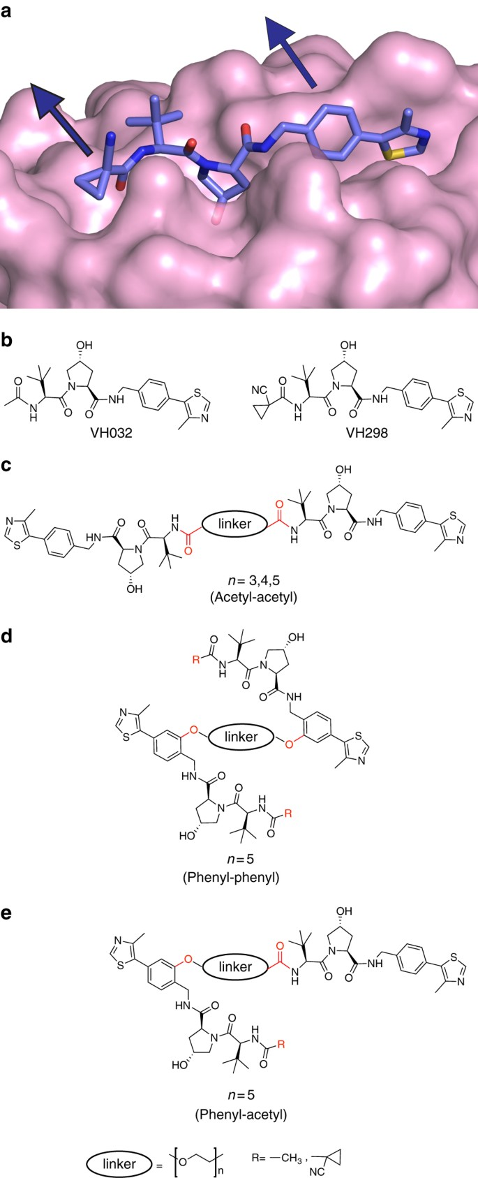 Homo-PROTACs: bivalent small-molecule dimerizers of the VHL